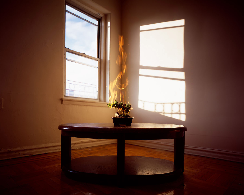 The Burning Bush, Yoav Friedlander, Queens, New York