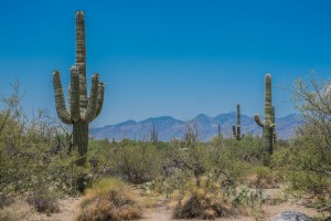 On The Road: Saguaro National Park