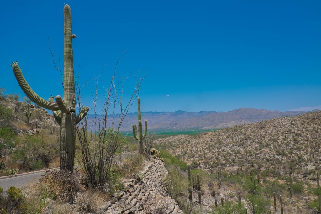 saguaro national park, arizona, yuma, california, national park, cactus, cacti, desert, southwest, american landscape, photography, desert photos, hot, heat, unbearable heat, tucson