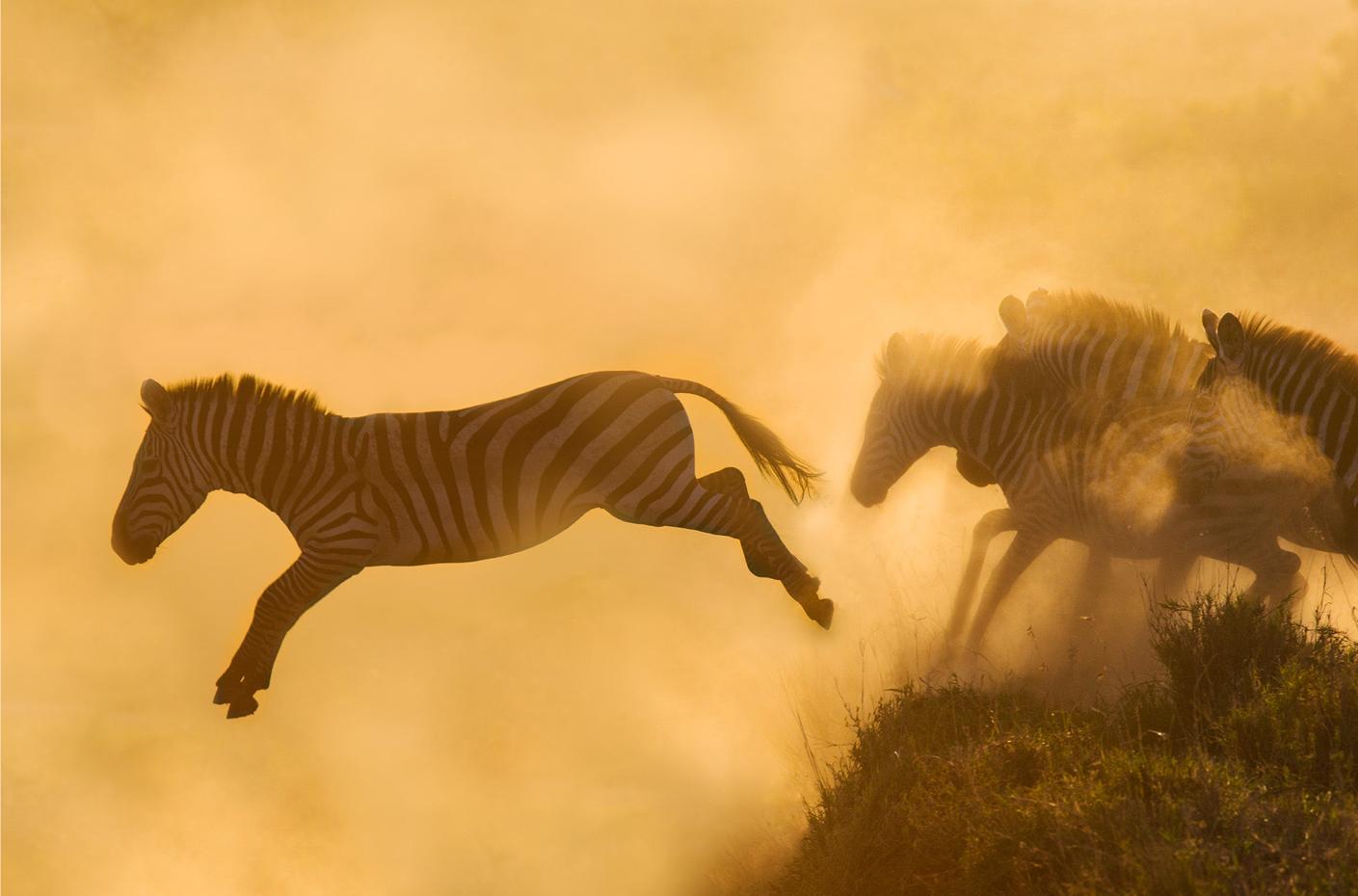 richard bernabe, zebra, landscape photography, africa, zebra, zebra herd, spirit of africa, desert, namibia, morocco