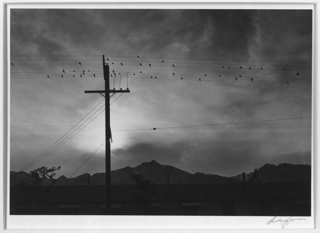 Ansel Adams, Bird on wire, manzanar relocation center, japanese internment camp, world ward ii