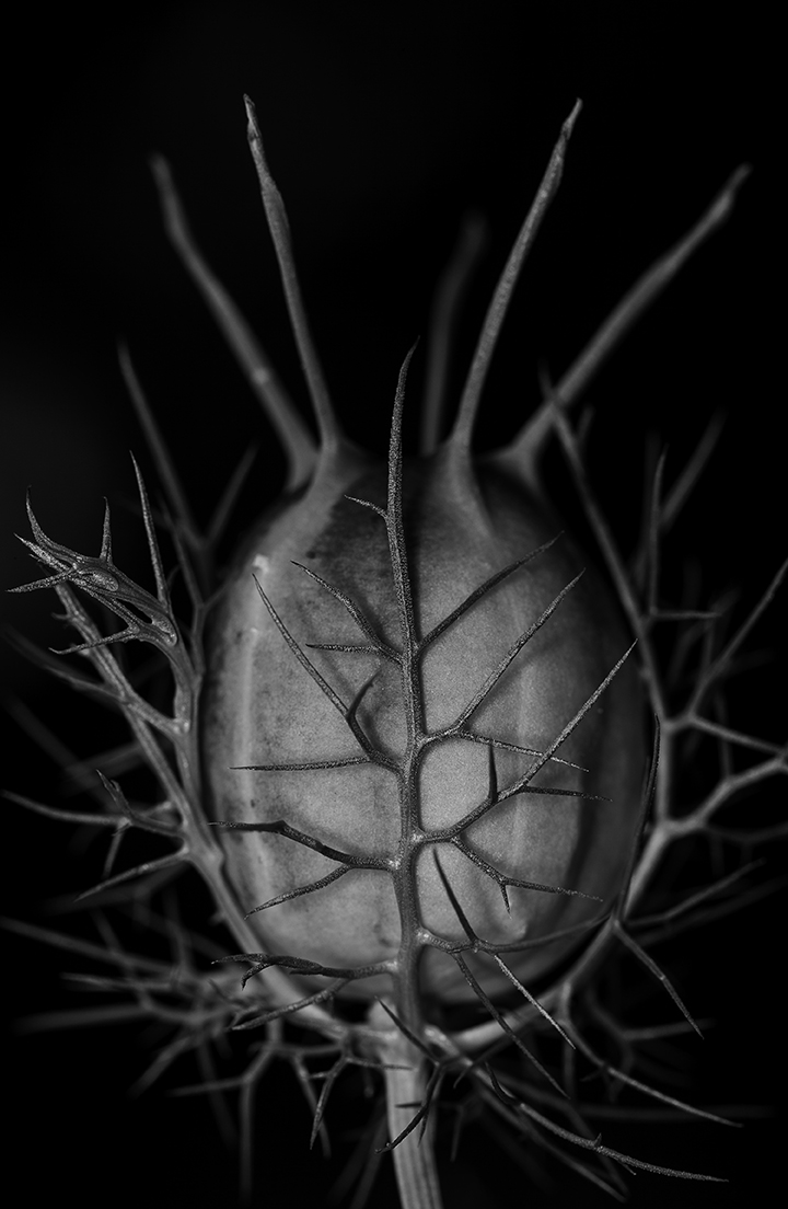 macro photography, plant matter, black and white image, living plants, still life photograph, flower