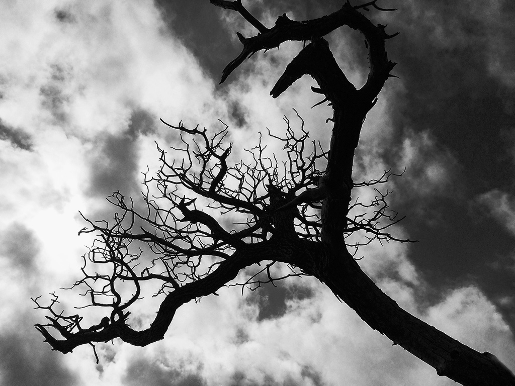 hawaii, dead tree, iPhone, Alina Oswald, black and white photography, black and white